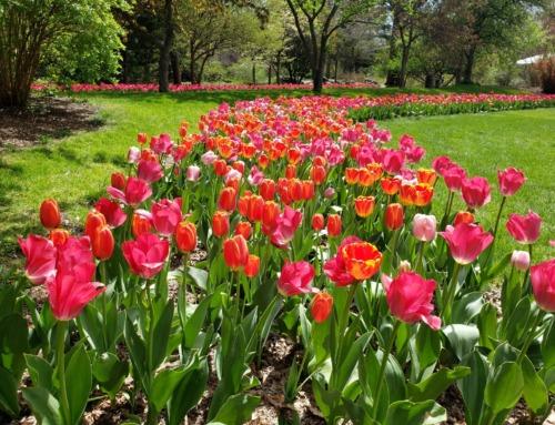 Michigan's most family-friendly public gardens